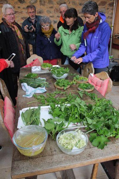 Cueillette plantes sauvages et ateliers culinaires au Domaine des Mollières