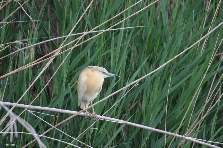 Réserve Ornithologique de Haute-Provence