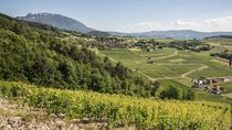 Vignoble de Jongieux