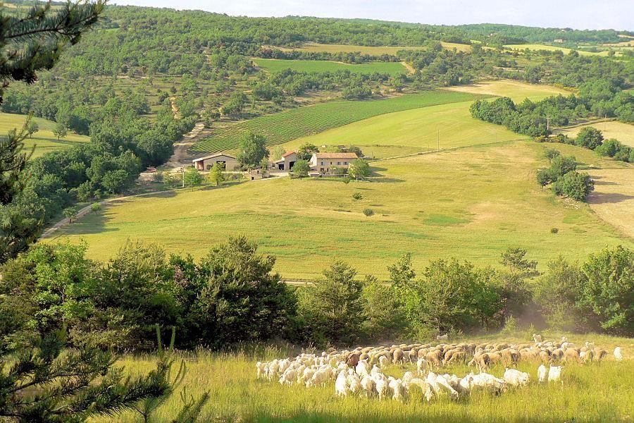 Картинки по запросу Mohair en Provence
