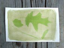 Atelier créatif : photographie végétale - groupe enfants