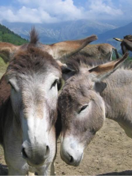 Donkey farm visit