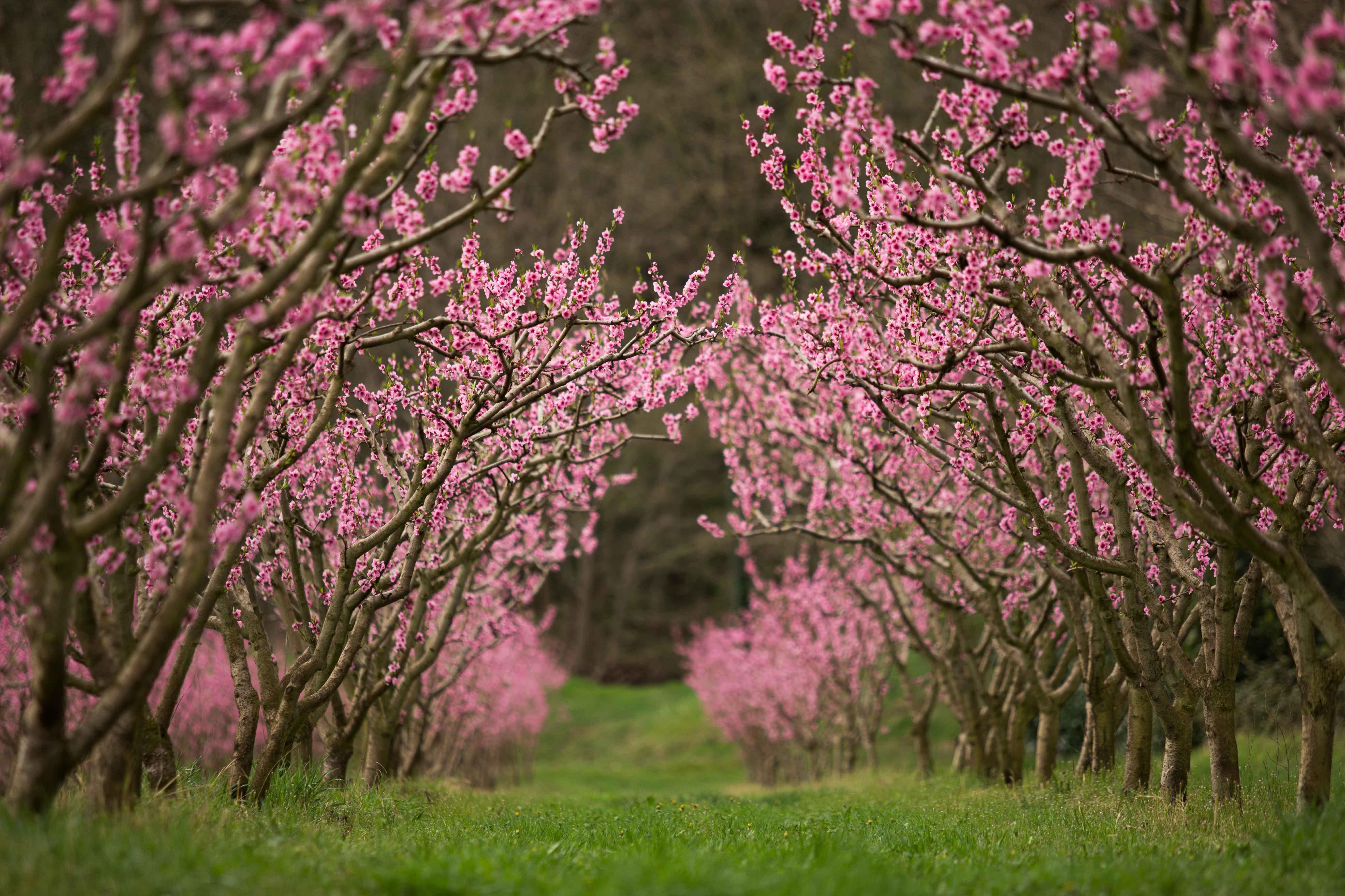 Visite guidée Arboriculture en vallée de l'Eyrieux