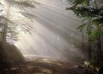 La vie de la forêt, le jeu 100% nature avec Massif Central Randonnées - Burzet