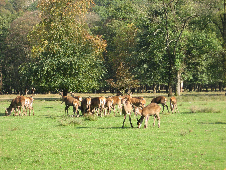 Parc Animalier_Domaine de Vizille