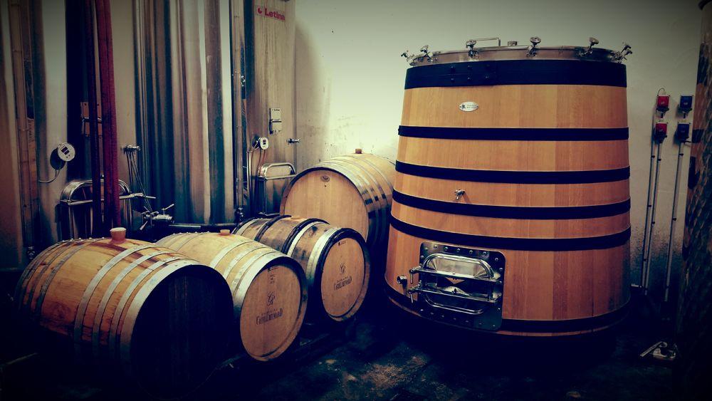 Castell Reynoard Vineyard - Wine barrels - Julien Castell