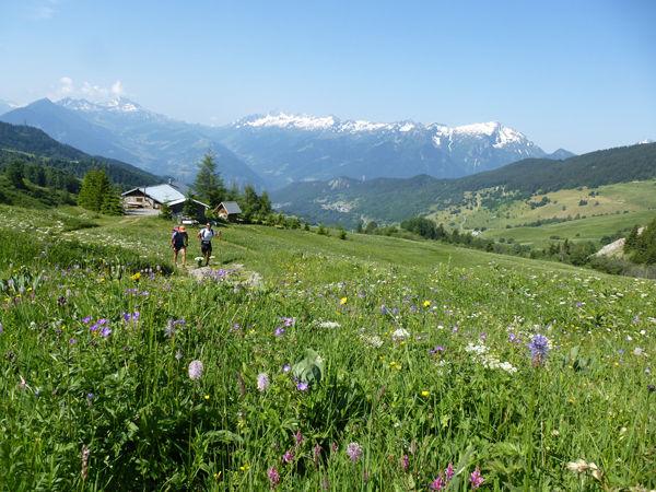 Grand Tour de Tarentaise (27 jours - à composer à sa guise)