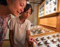 Muséum des Papillons et des Insectes