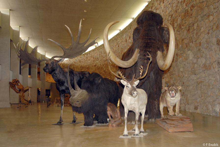musée_troupeau