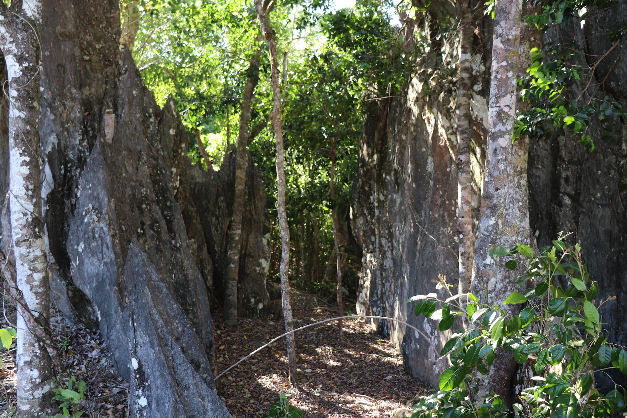 Sentier pédestre guidé Haute Néhoué