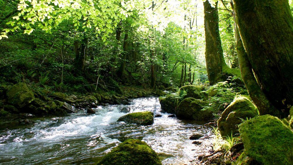 Le ruisseau de Candesoubre