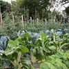 Coucou Le Jardin de l'Essentiel Légumes Ⓒ Corinne Lafort - 2018