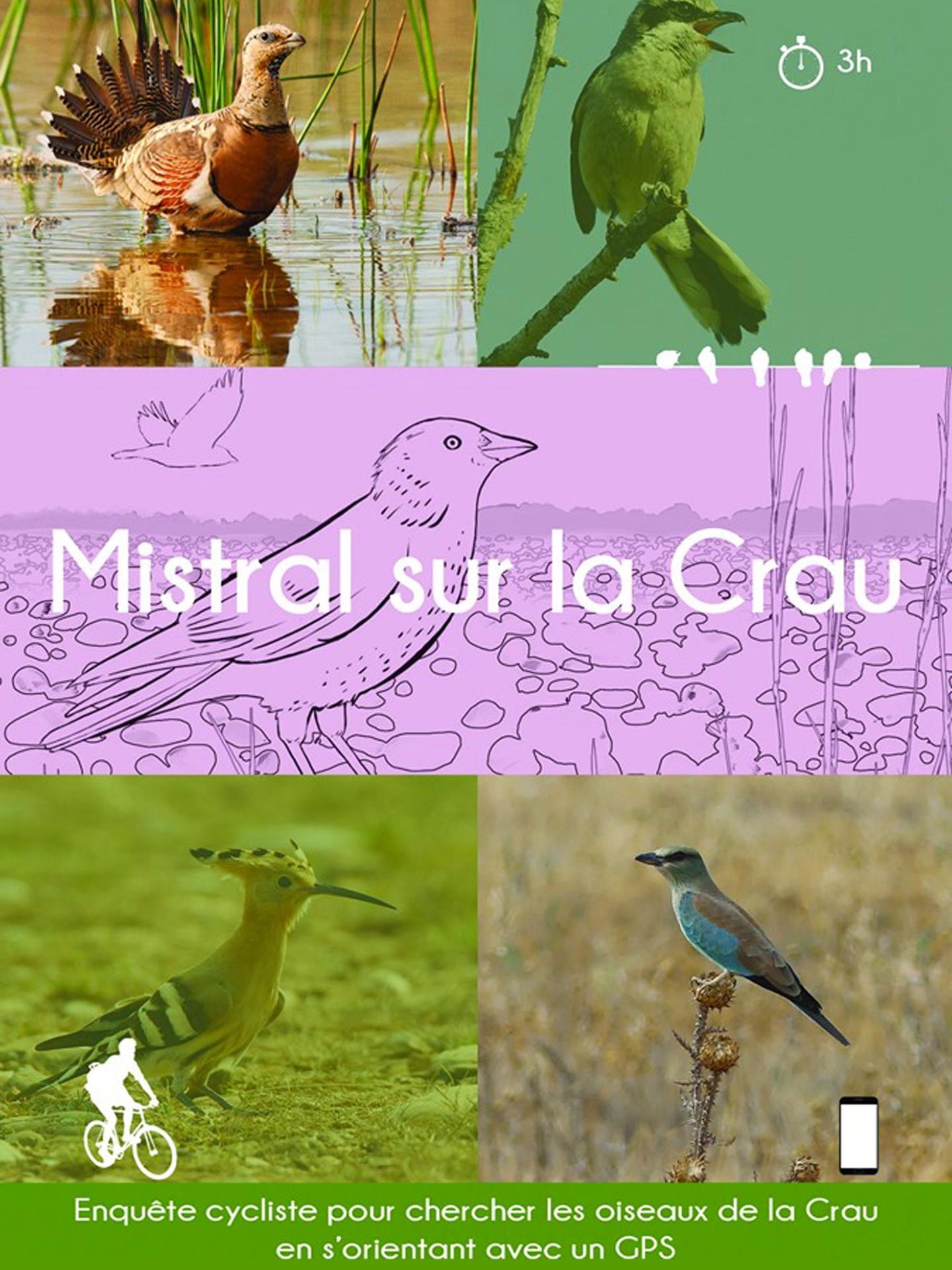 chasse-au-tresor-:-mistral-sur-la-crau