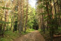 Sentier des bois