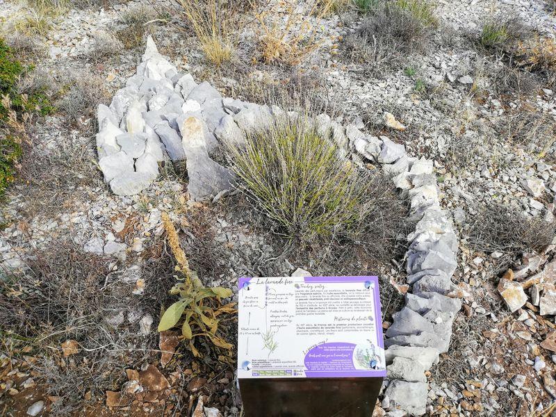 Les Graves - Sur le chemin des plantes de la Montagne de Lure
