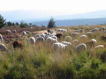 Soirée pastorale avec le berger - Montselgues