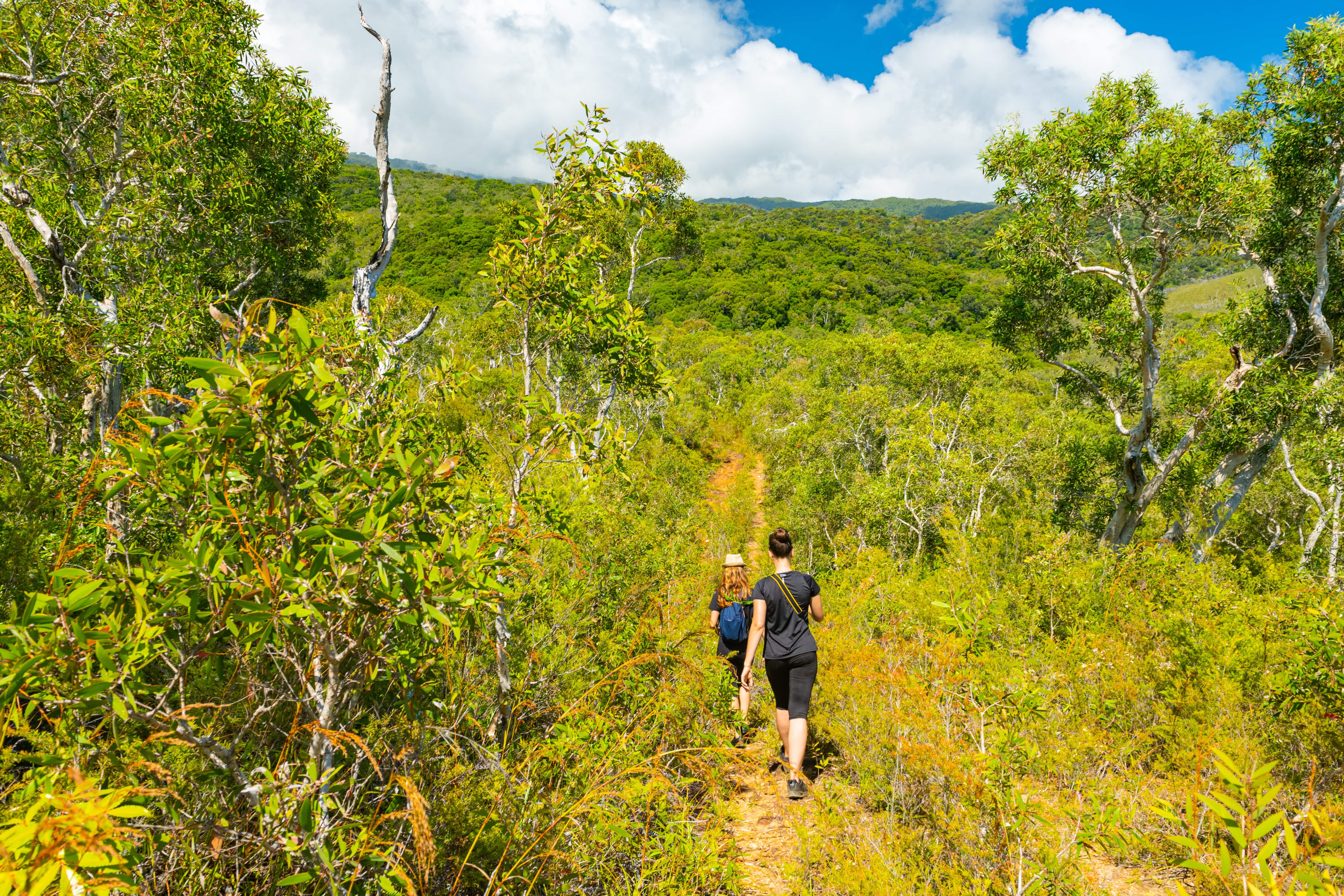 Sentier pédestre guidé sur la montagne de Colnett