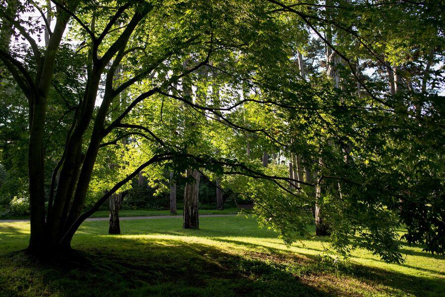 Dans le Bois de Vincennes