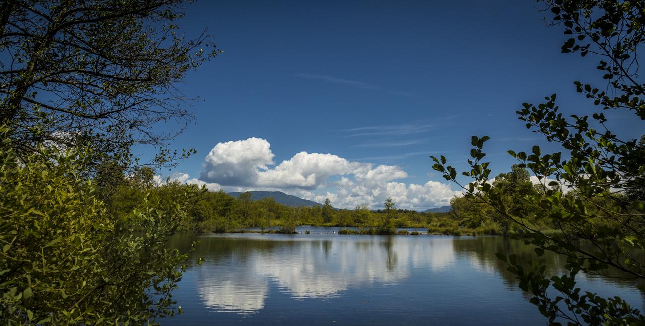 Espace Naturel Sensible de la Save - Secteur des étangs de Passins