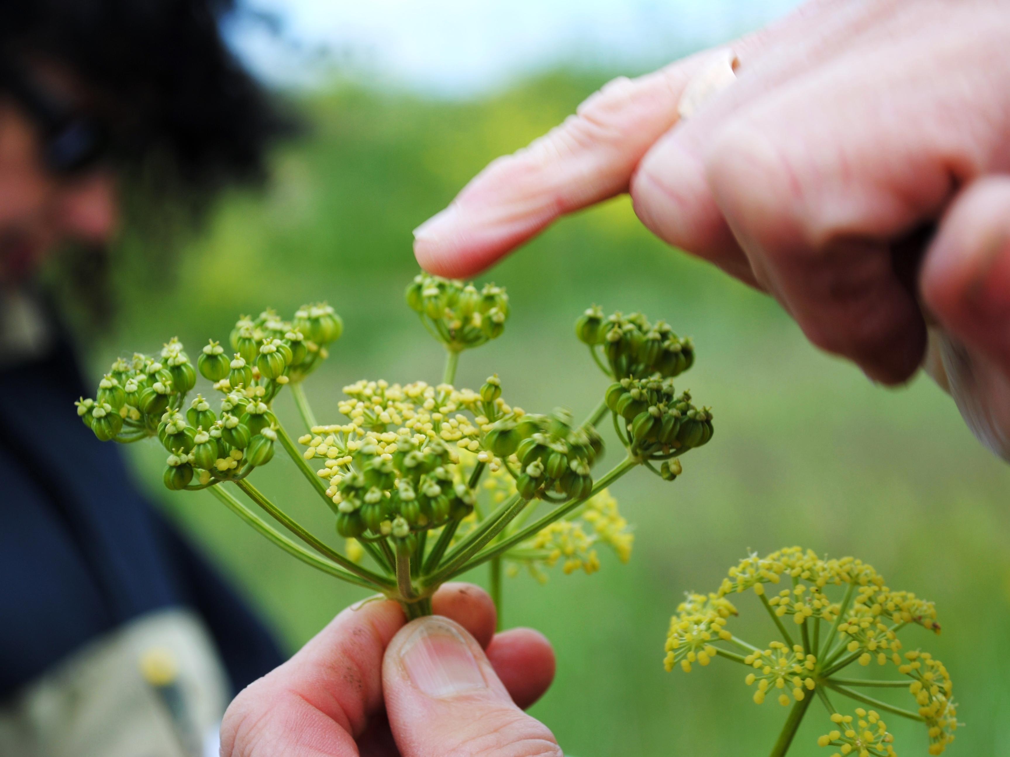 Events…Put it in your diary : Sortie-découverte Plantes sauvages comestibles et médicinales