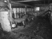 Ferme Les Sources du Peyrot - Montarcher (42380)