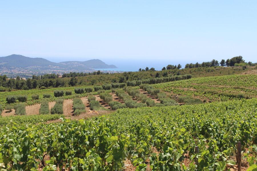 Suffrène's vineyard - Vine and sea view - Cédric Gravier