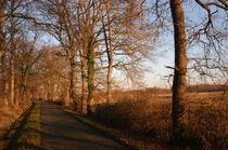 Chemin de plaine