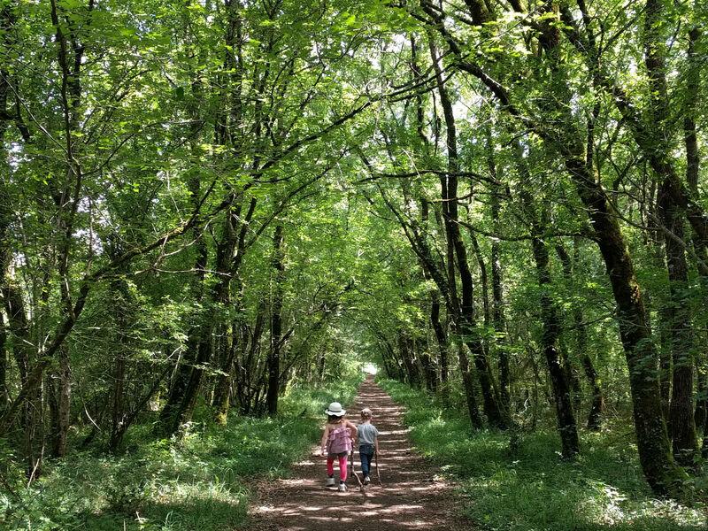 Balade en famille en forêt de Benon