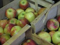 La Ferme aux pommes