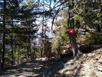 Sentier en forêt - balisage