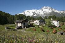 Alpage Le Monal