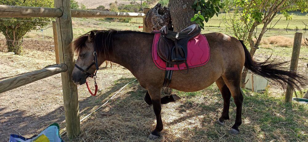 Balades à poneys avec lEcurie des quatre Soleils