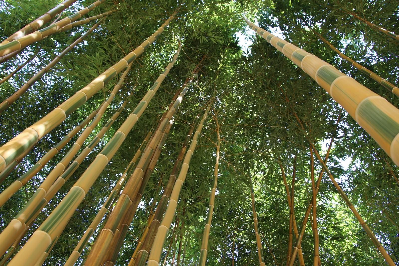 bambous-en-provence