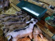 Visite de la chèvrerie - Montpezat-sous-Bauzon