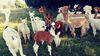 La Lamas du Tilloux Ⓒ La Lamas du Tilloux