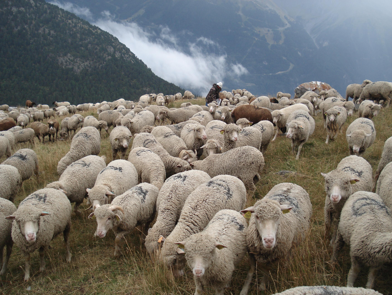 Rendez-vous à la ferme : Visite guidée