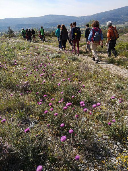 Les Crêtes de Lure - Sur le chemin des plantes de la Montagne de Lure