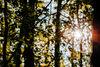 Forêt Sous-bois Ⓒ Malaury BUIS- OTI Vallée du coeur de France