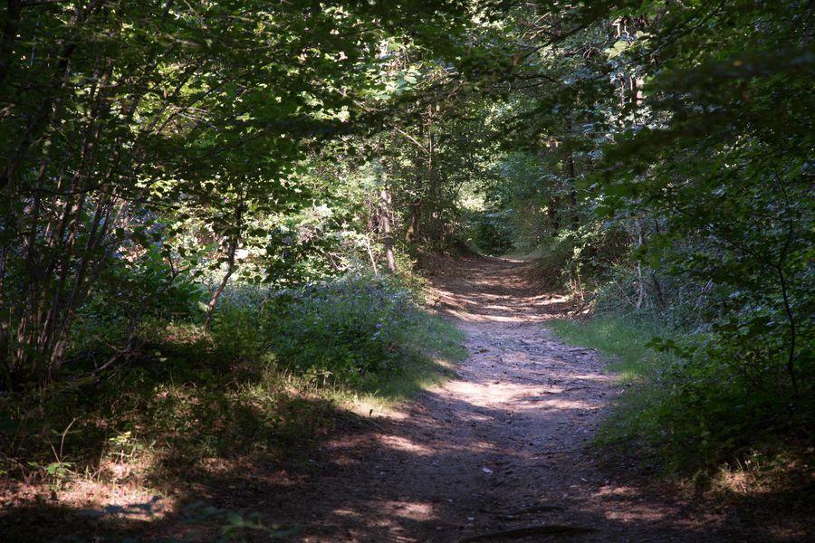 Circuit VTT n°2 dans la forêt de Sérénac