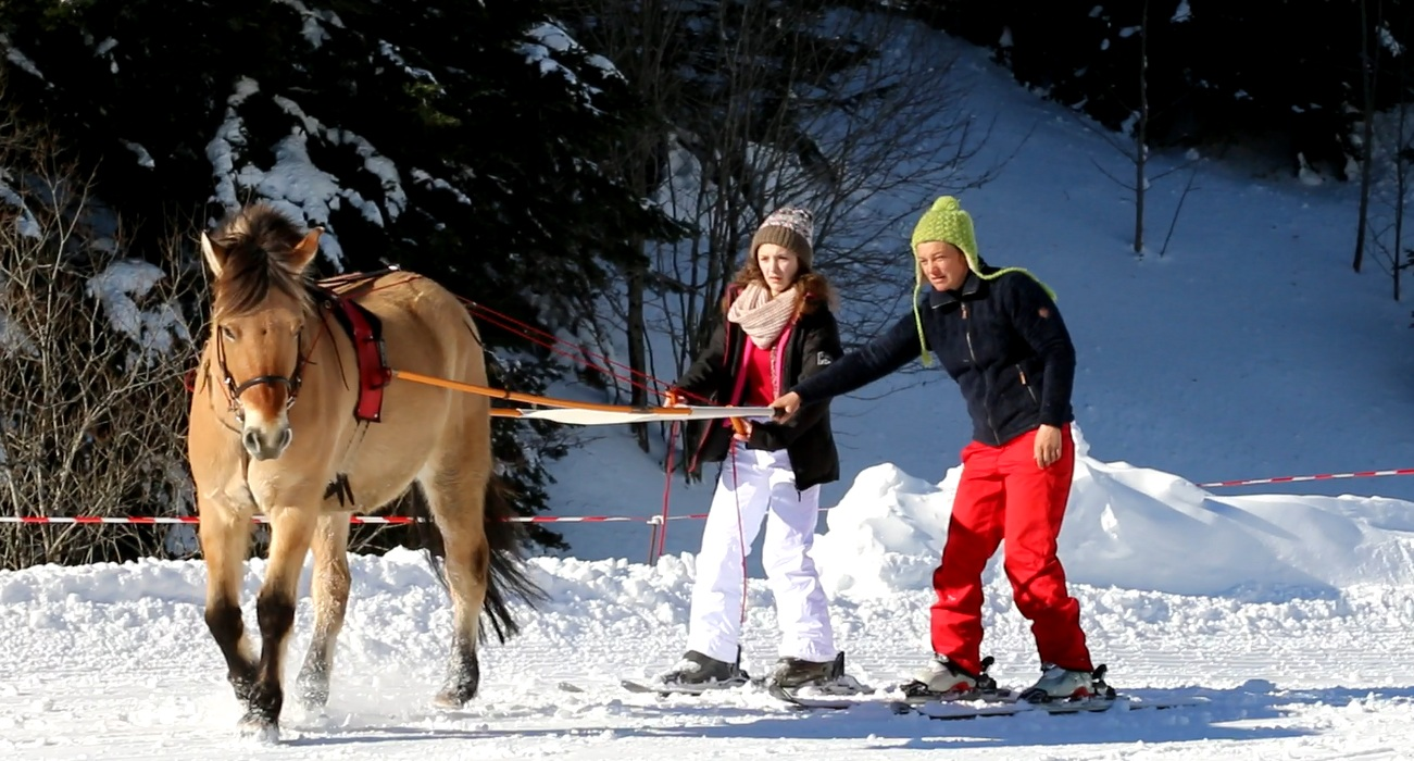 Balade en ski joering avec la ferme équestre de l'Alagnon