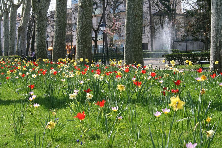 Jardin Frascaty