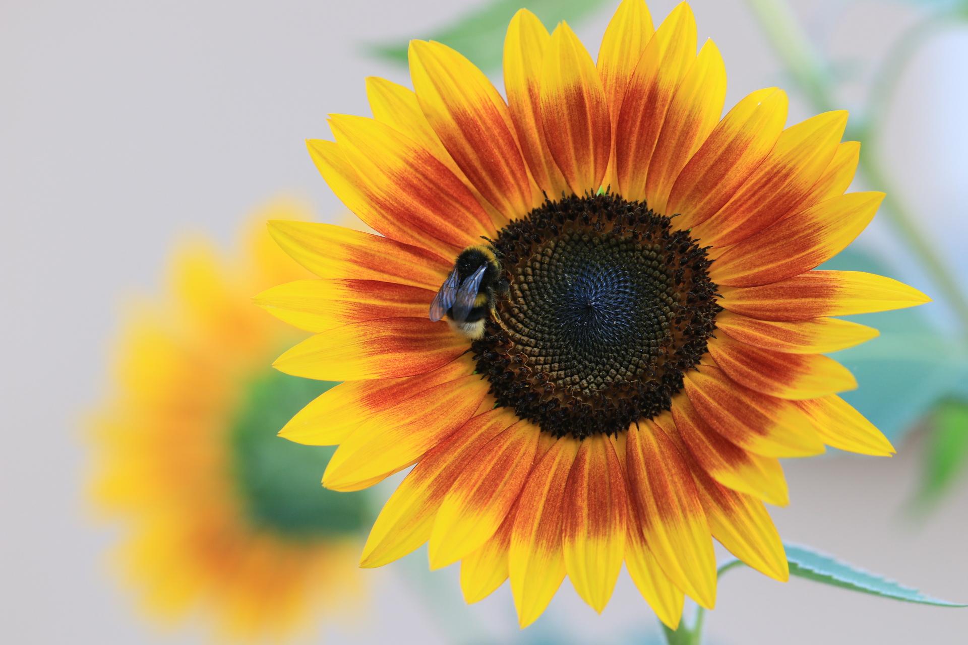Atelier Fleurs et plantes, utilisons-les autrement