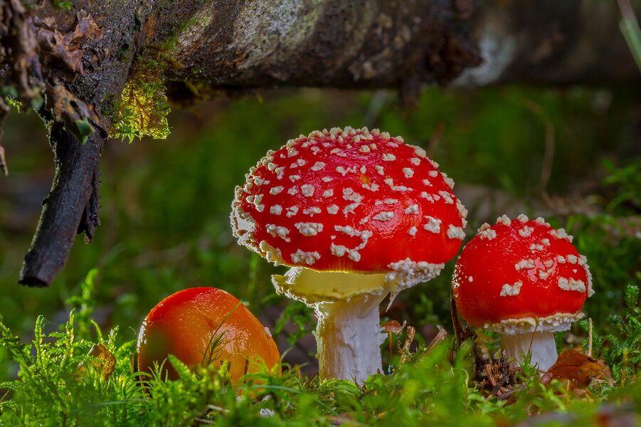 ANNULE - exposition mycologique