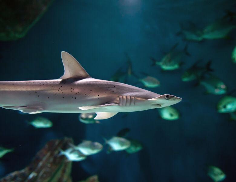 Espace des requins