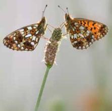 Fleurs et papillons de Pierrefitte