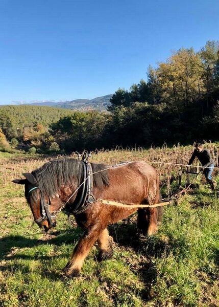 Baraveou Vinyard - In the vineyards - Baraveou Vinyard