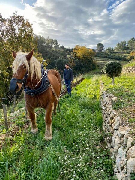 Baraveou Vinyard - Work with horse - Baraveou Vinyard