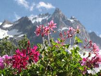 Fleurs de la terrasse - @HotelLaMeijette