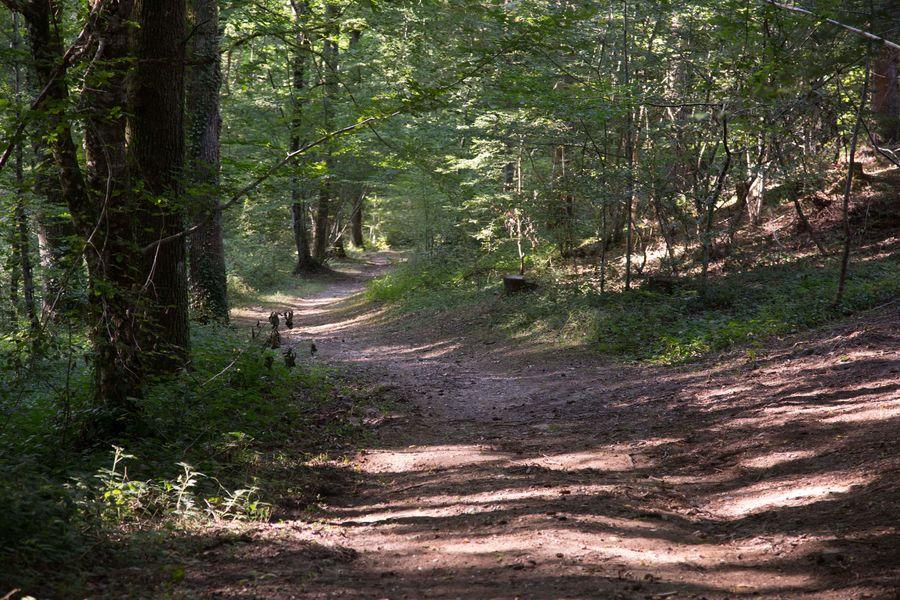 Circuit VTT dans la forêt de Sérénac