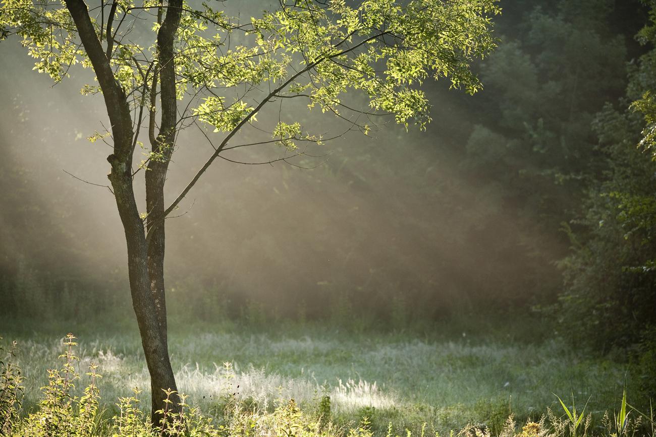 Espace Naturel Sensible Marais de la Léchère